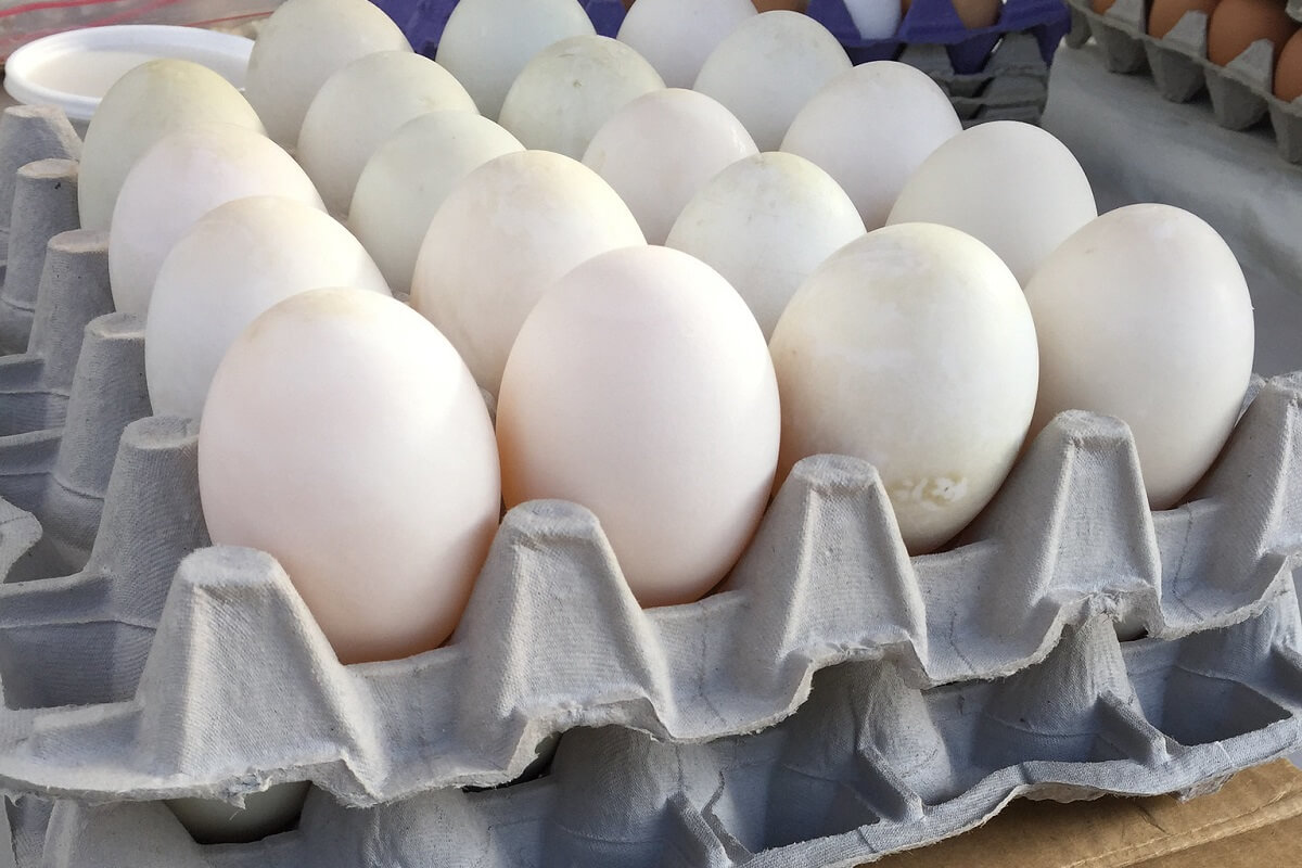 Fresh Local Duck Eggs 0.5 dozen - £ 2.10  per box