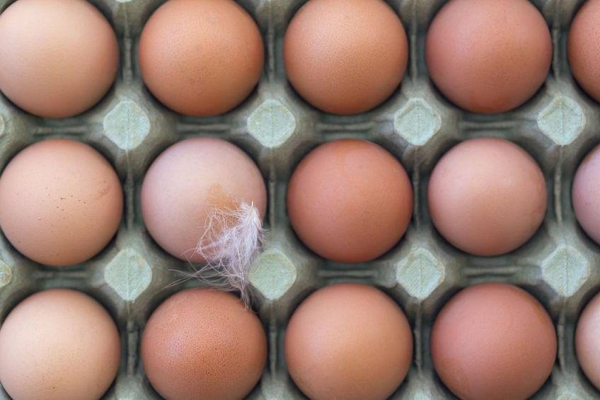 Fresh Local Very large eggs 0.5 dozen - £ 1.20  per box
